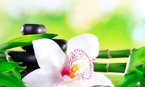 МК-033 Орхидея на камнях