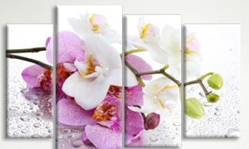 МК-048 Орхидеи в росе