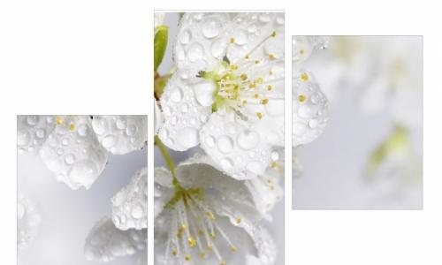 МК-002  Яблоня в росе