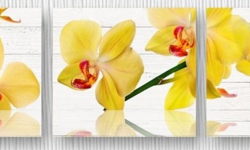МК-025 Желтые орхидеи