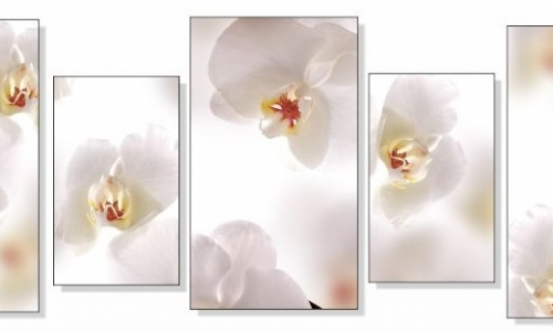 МК-059 Белая орхидея