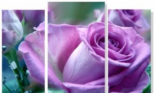 МК-065 Сиреневая роза
