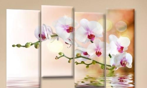 МК-051  Орхидея_отражение