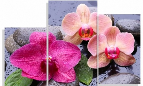 МК-064  Розовые  орхидеи на камнях