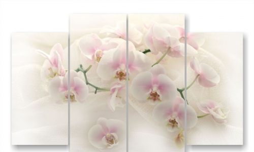 МК-066, Орхидеи на белом