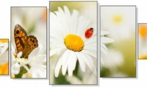 МК-053 Бабочки на лугу