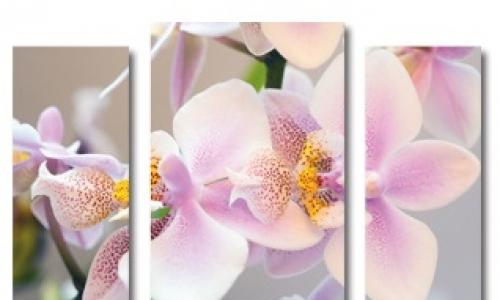 МК-054 Розовая орхидея