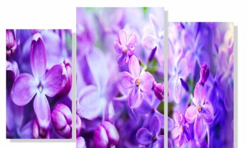 МК-028 Сирень в цвету