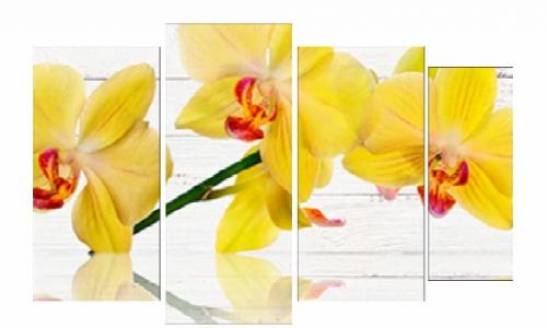 МК-061, Желтая орхидея