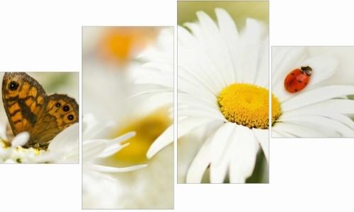МК-046  Белые ромашки