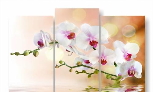 МК-023 , орхидеи на бежевом