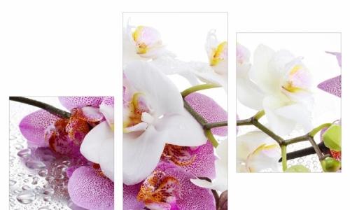 МК-003  Ветка орхидеи в росе